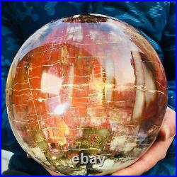 10260g Large Natural Petrified Wood Fossil Crystal Geode Sphere Ball Healing