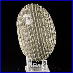 3.8 Black & Gold Striped PYRITE Crystals Sphere Ball CONCRETION China for sale